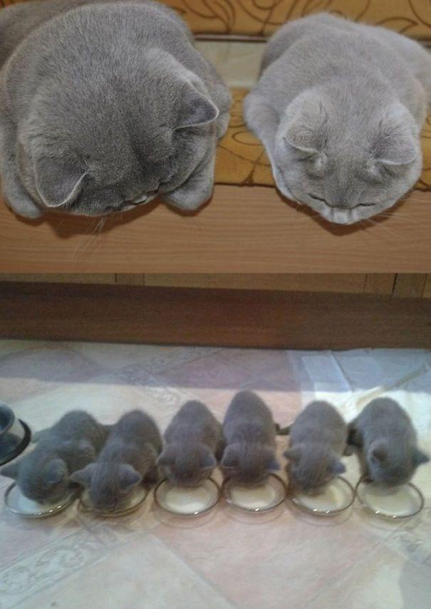maternidad-animal8