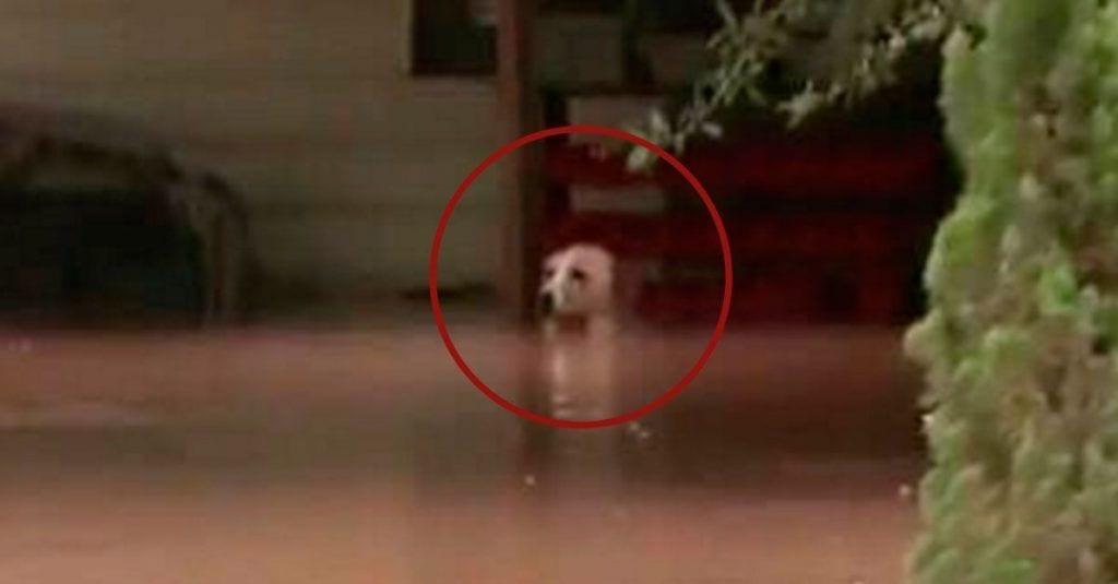 perra rescatada inundacion