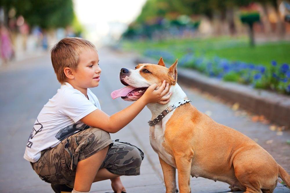 perro adoptar5