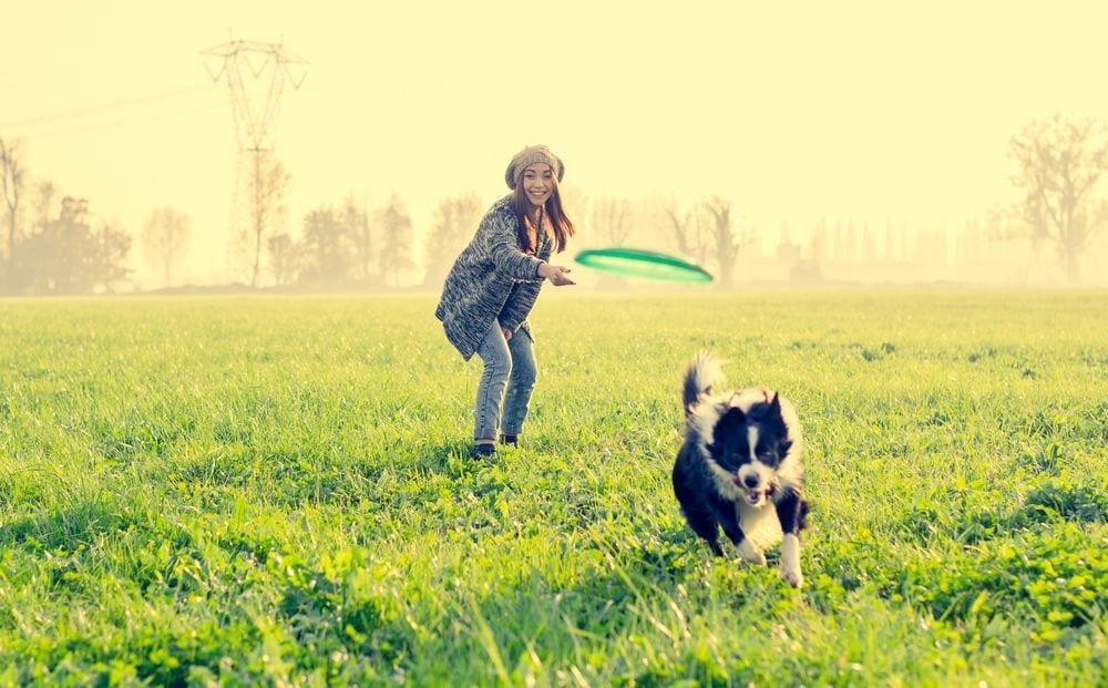perro-adoptar6
