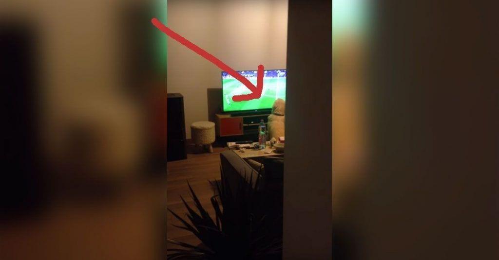 perro futbol television
