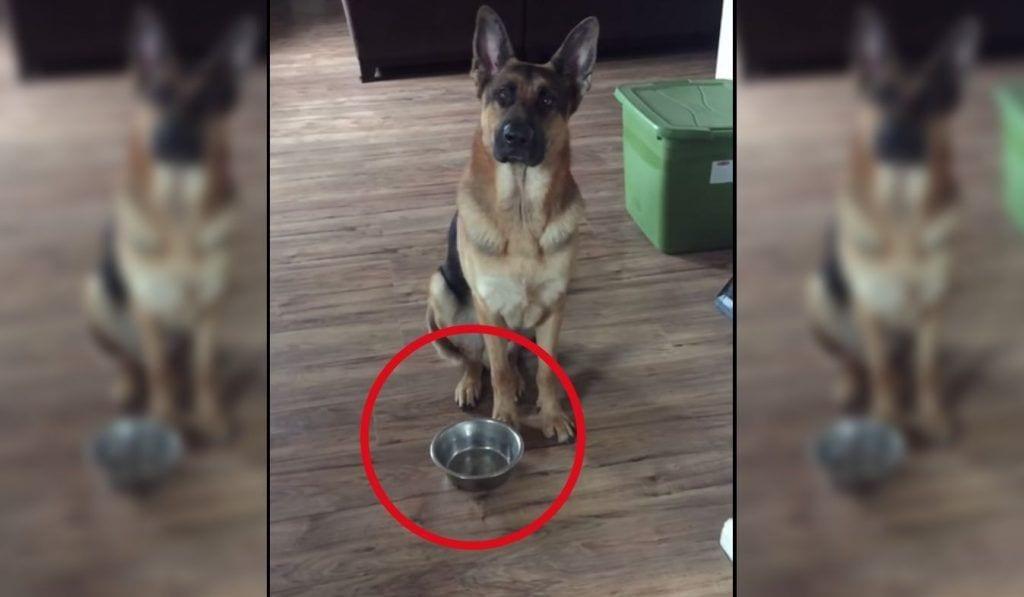 perro hambre destacada
