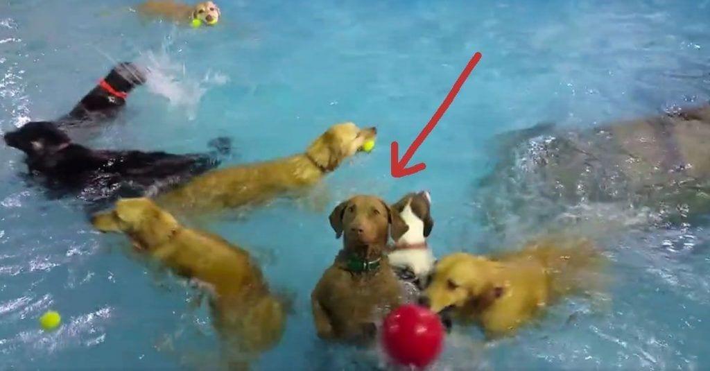 perro raro piscina