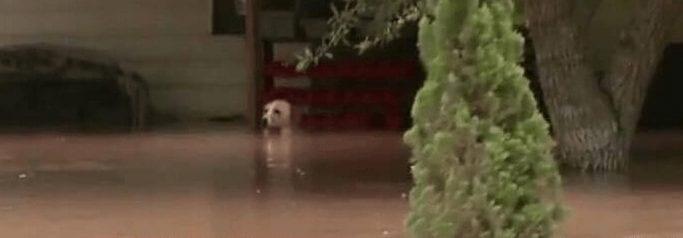 perro-rescatado 1