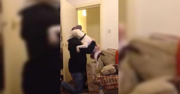 perro rescatado1