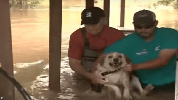 perro-rescatado5