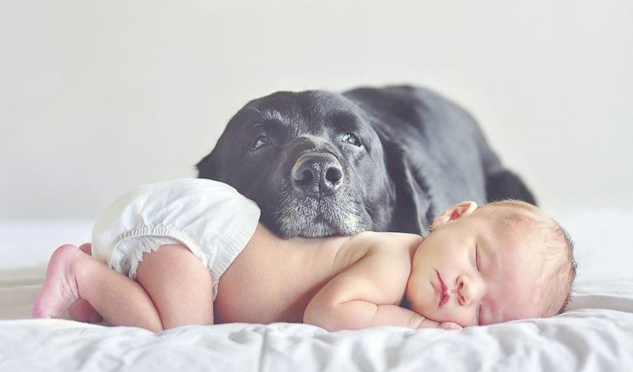 perros-grandes11