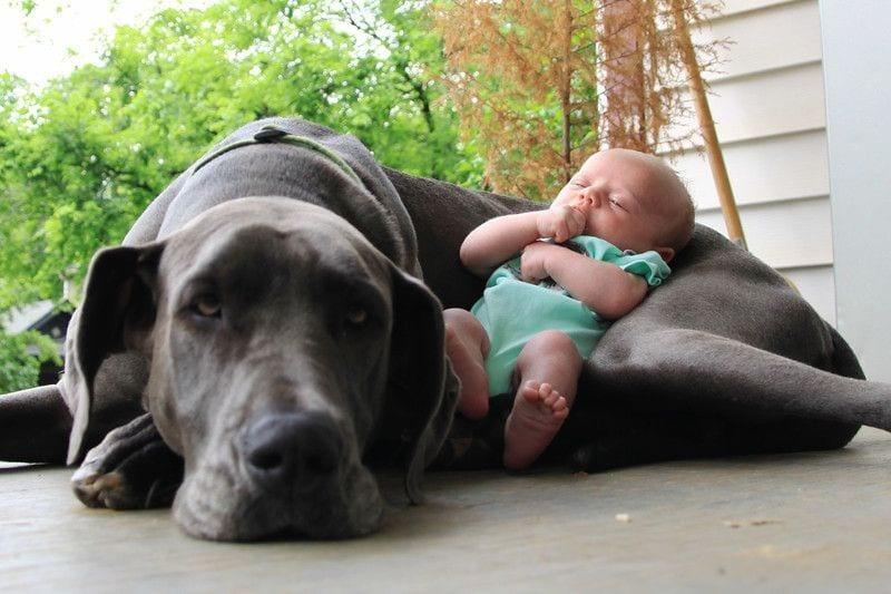 perros grandes16