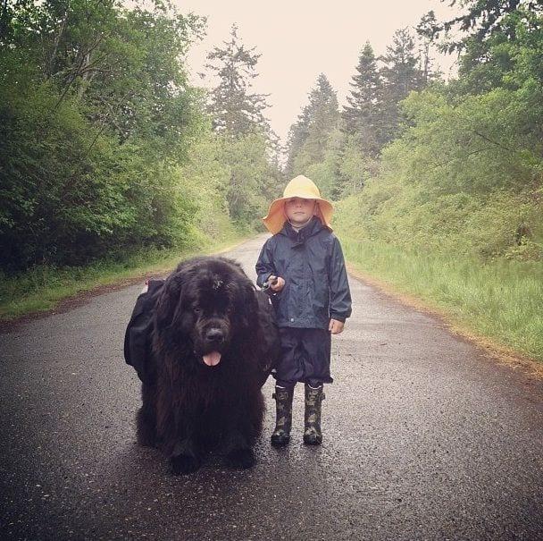 perros-grandes2