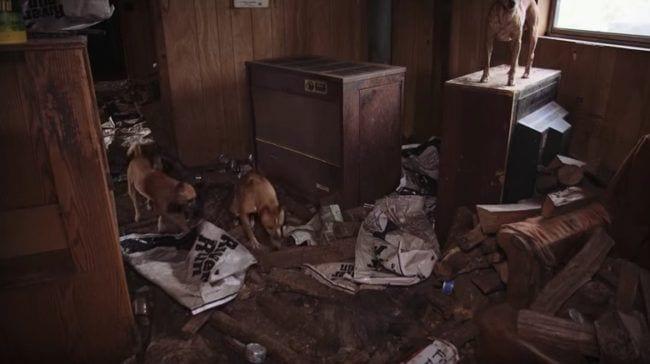 perros-rescare1