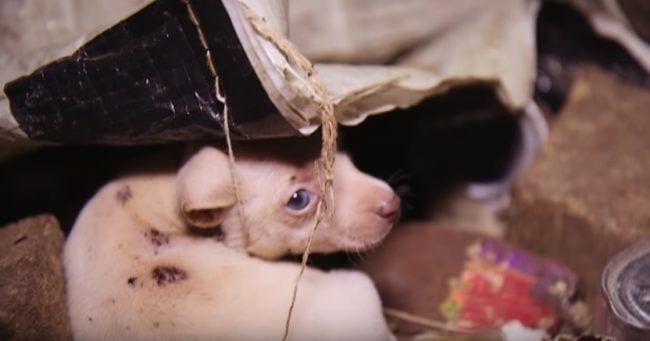 perros-rescate2