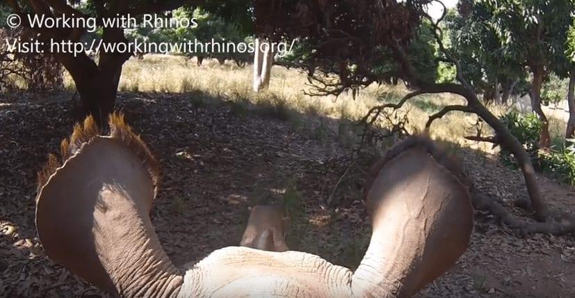 rino bebe rescate