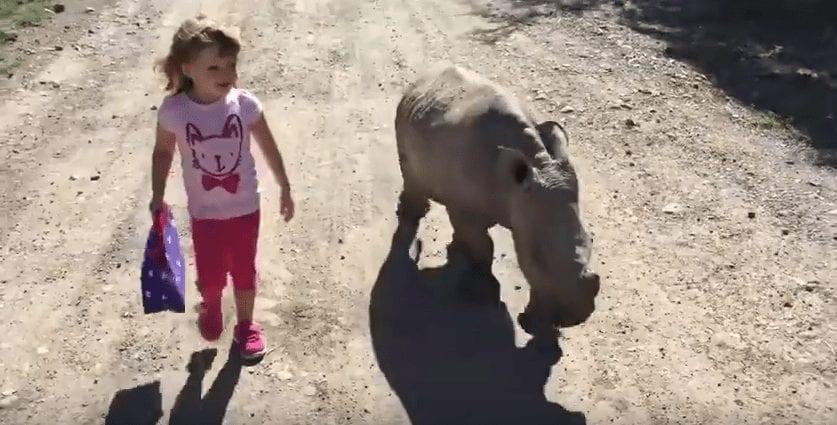 rinoceronte nina amigos