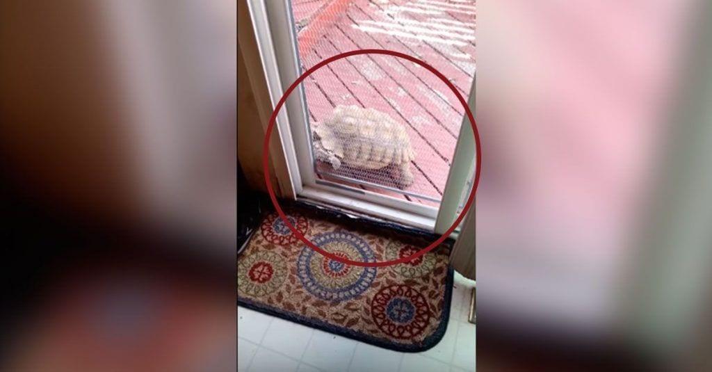 tortuga abriendo puerta