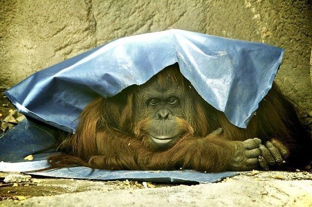 zoo libre1