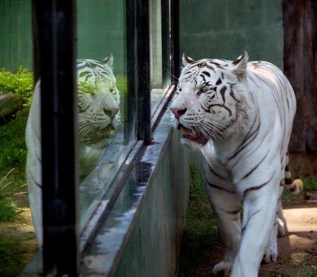 zoo-libre3
