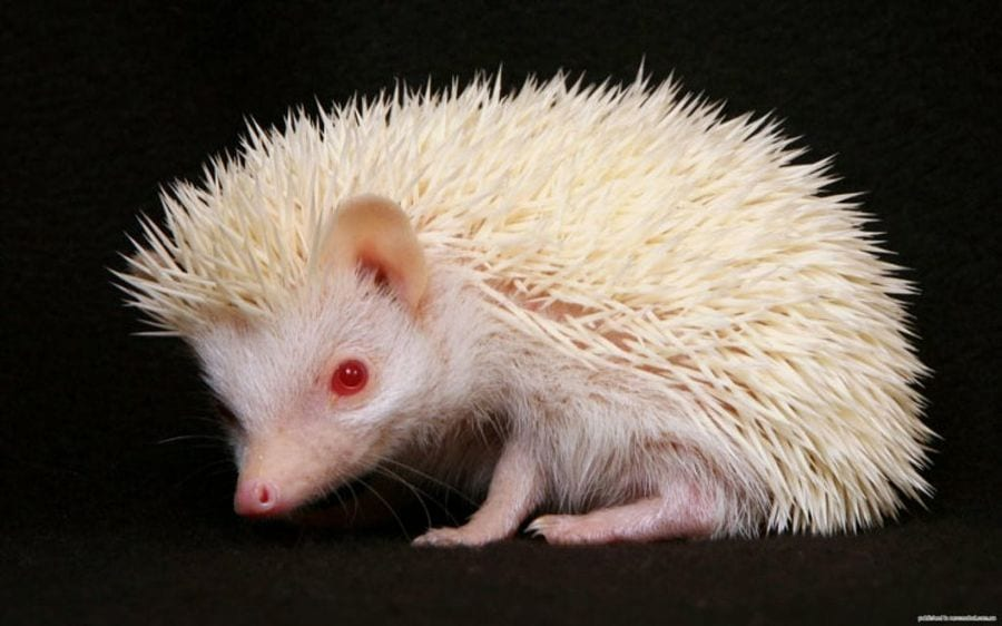 animales-albinos19