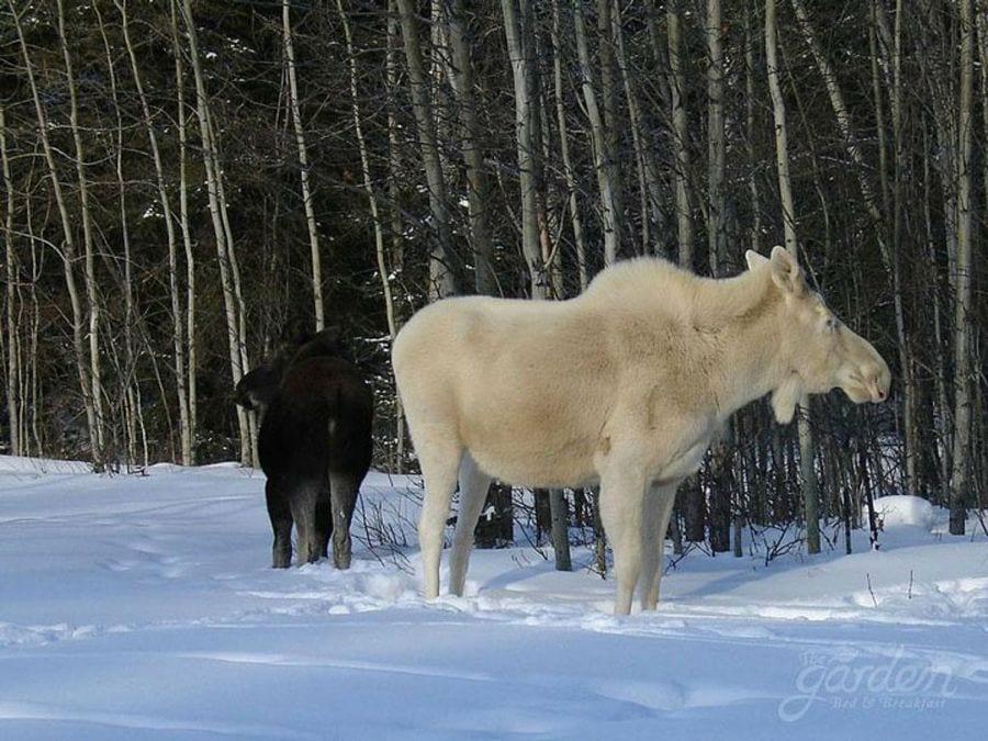 animales-albinos21