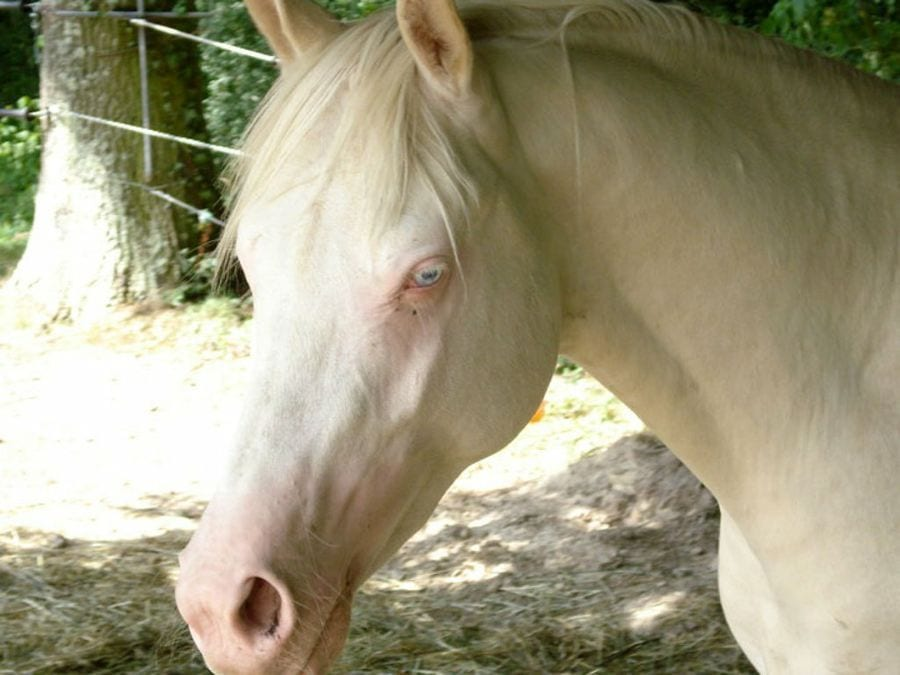 animales-albinos23