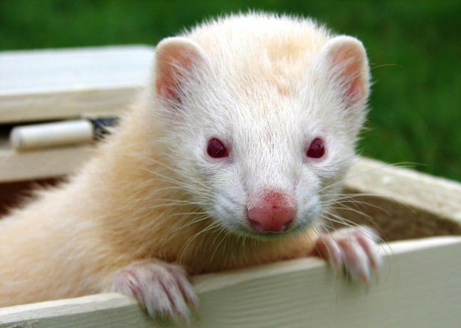 animales-albinos46
