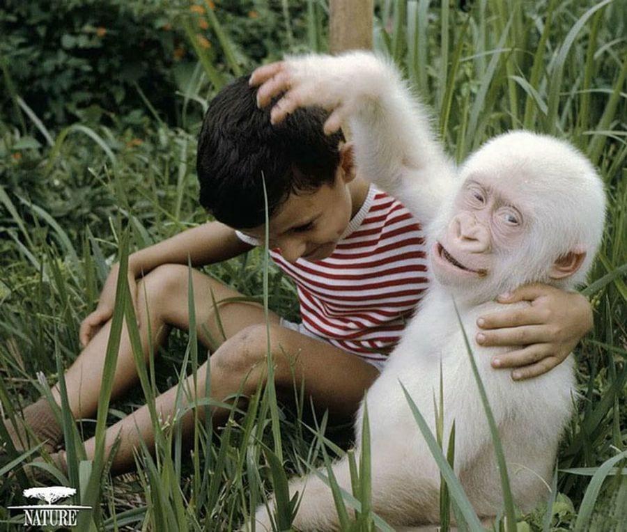 animales-albinos47