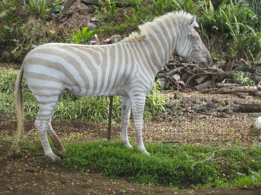 animales-albinos49