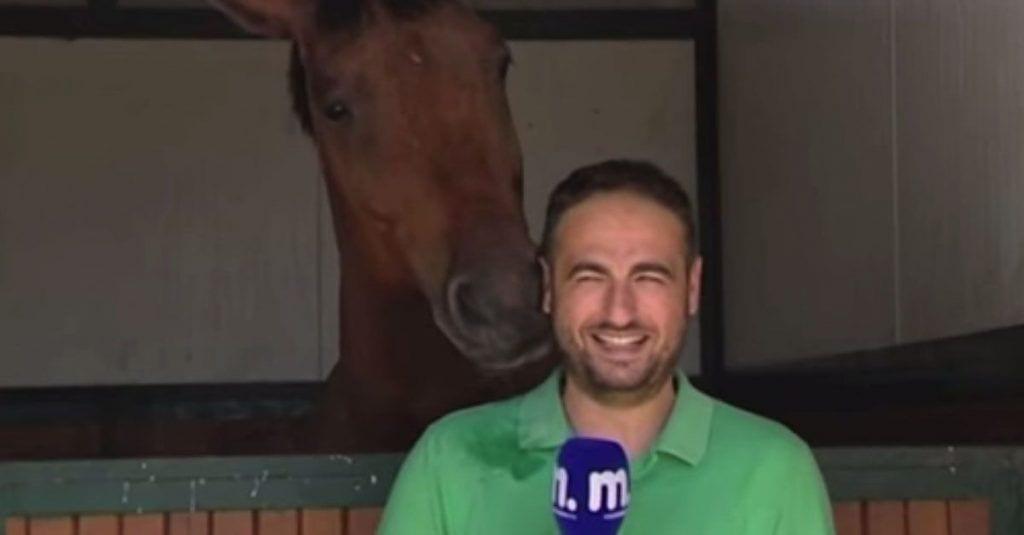 caballo reportero humor