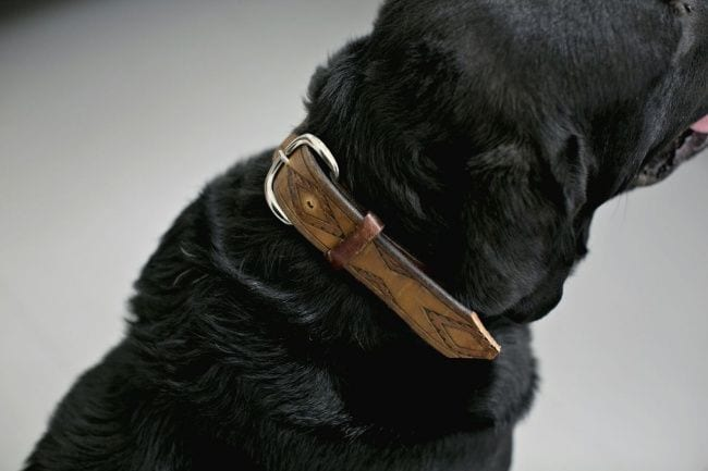 cosas-para-perros14