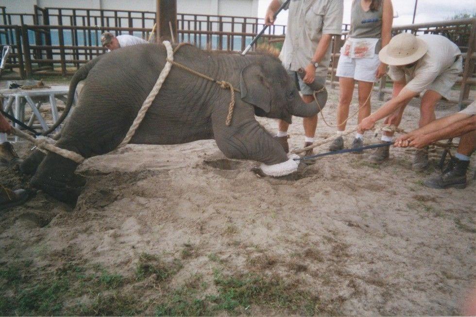 entrenamiento-elefantes5