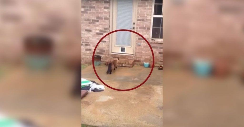 gatera gato puerta