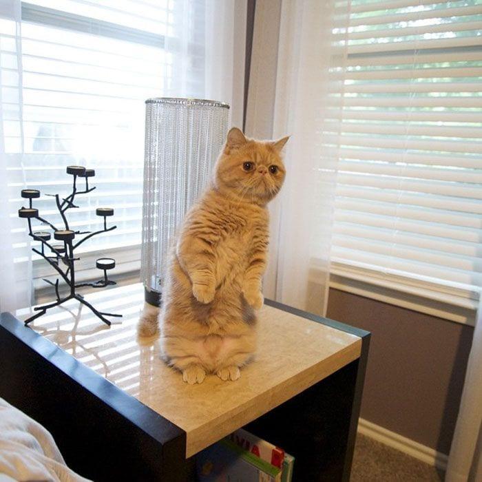 gato-humano1