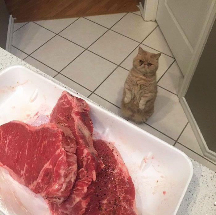 gato-humano10
