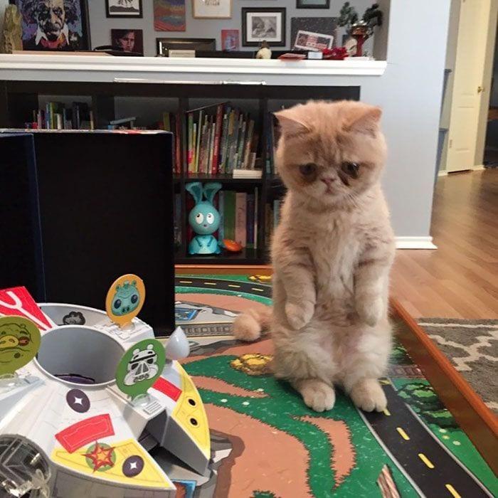 gato-humano11