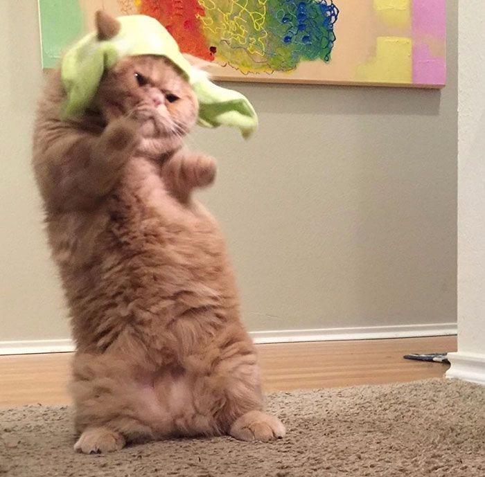 gato-humano14