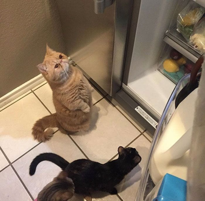 gato-humano15
