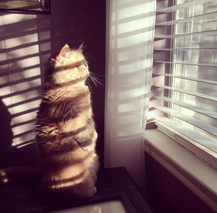 gato-humano3