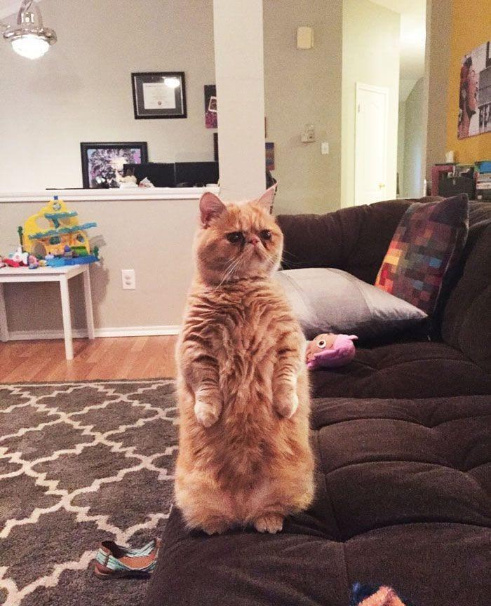 gato-humano4