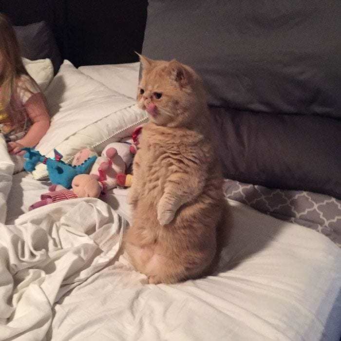 gato-humano7