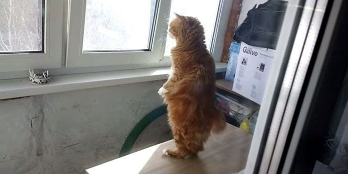 gato-humano8