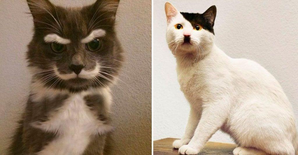 gatos reencarnados