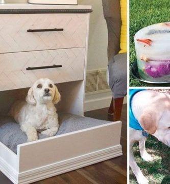 ideas perros manualidades