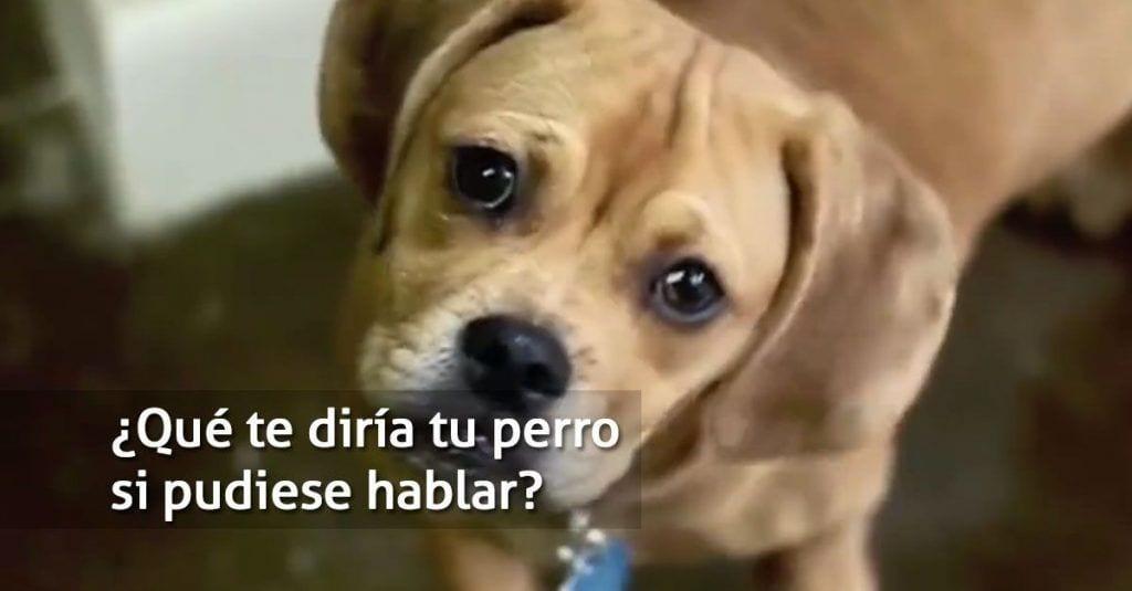perro hablando