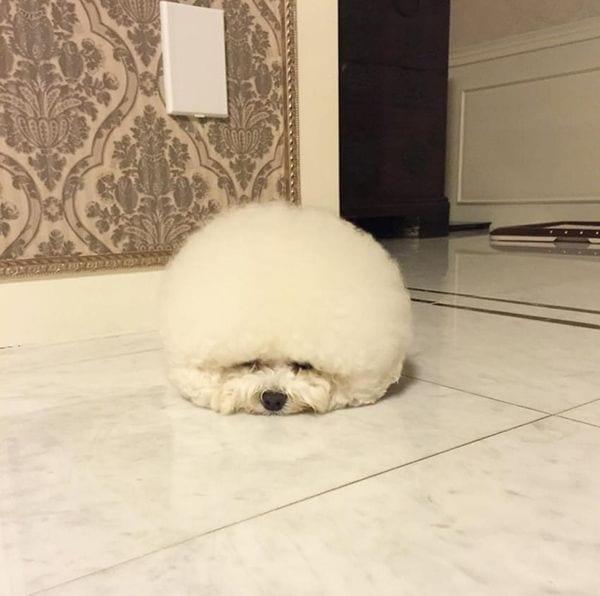 perro-nube2