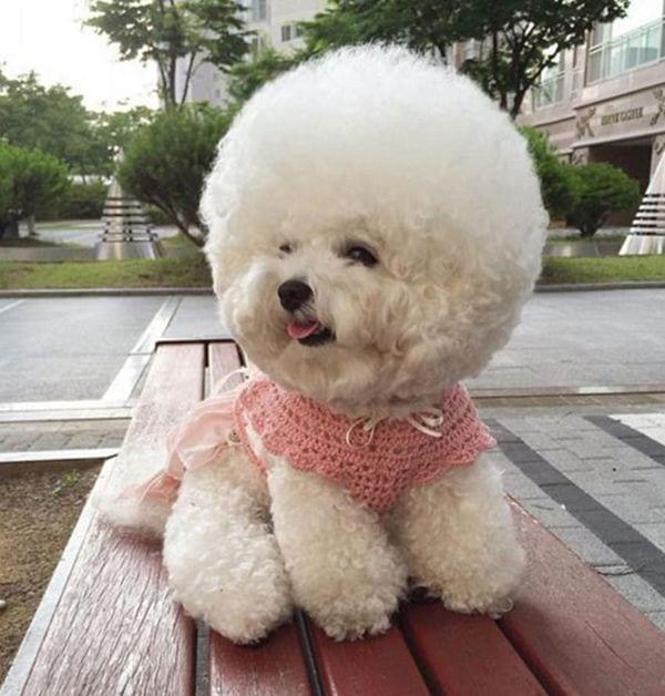 perro-nube5
