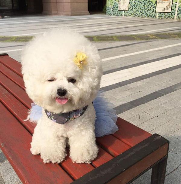 perro-nube6