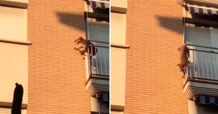 perro salta balcon