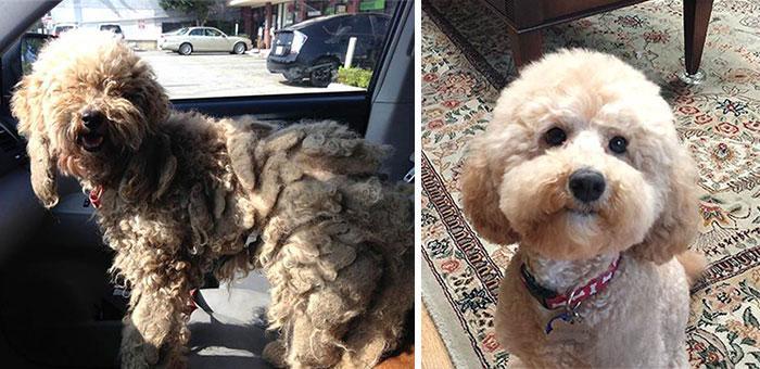 perros-antes-despues2