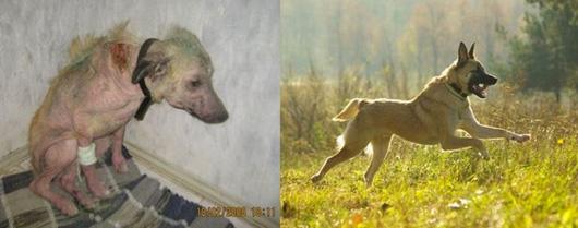 perros-antes-despues7