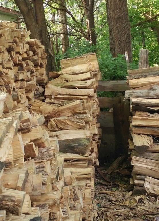 gato camuflado troncos