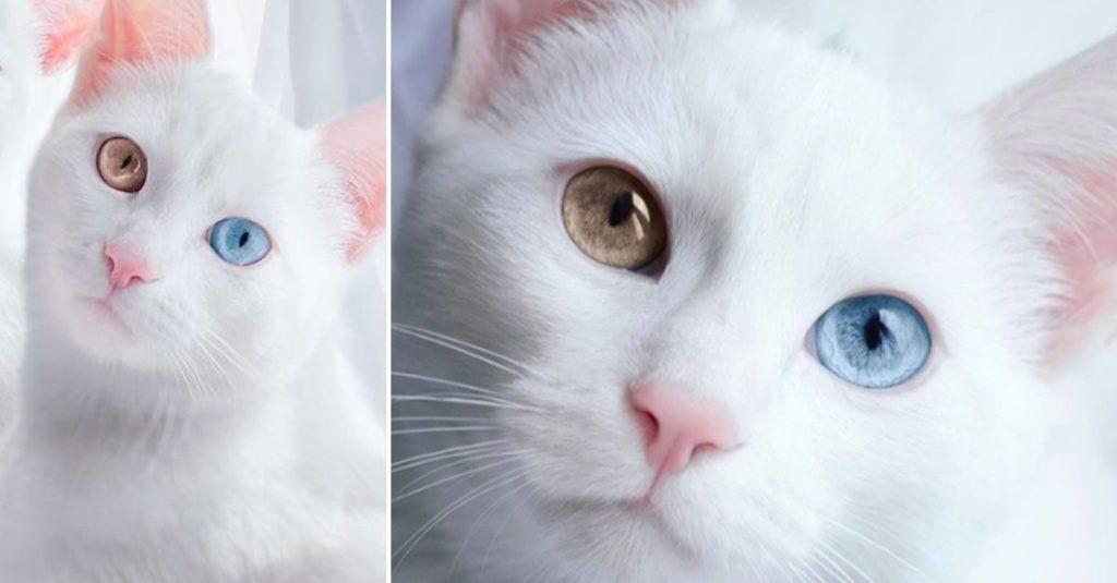 gato gemelo bonito